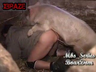 Pig Porno