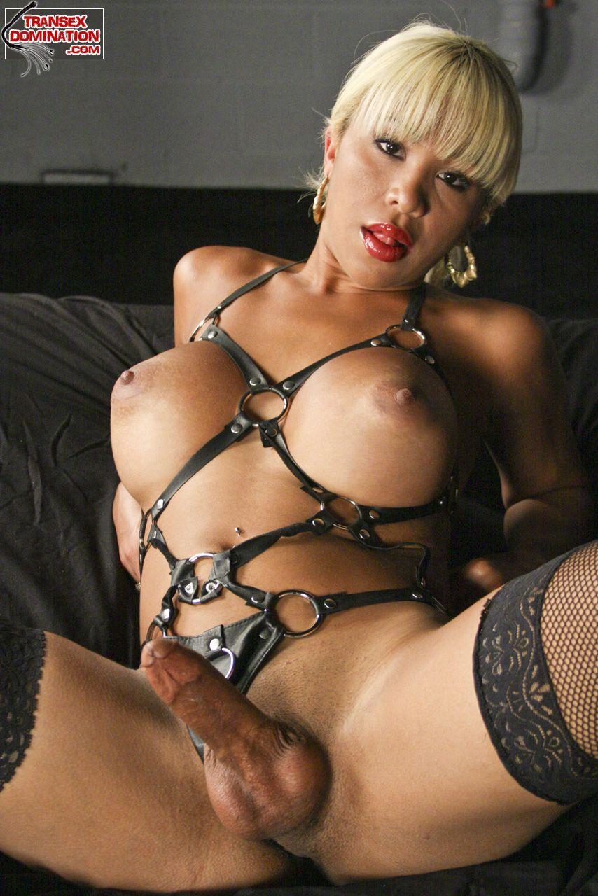 Ladyboy domination tgp nude pics