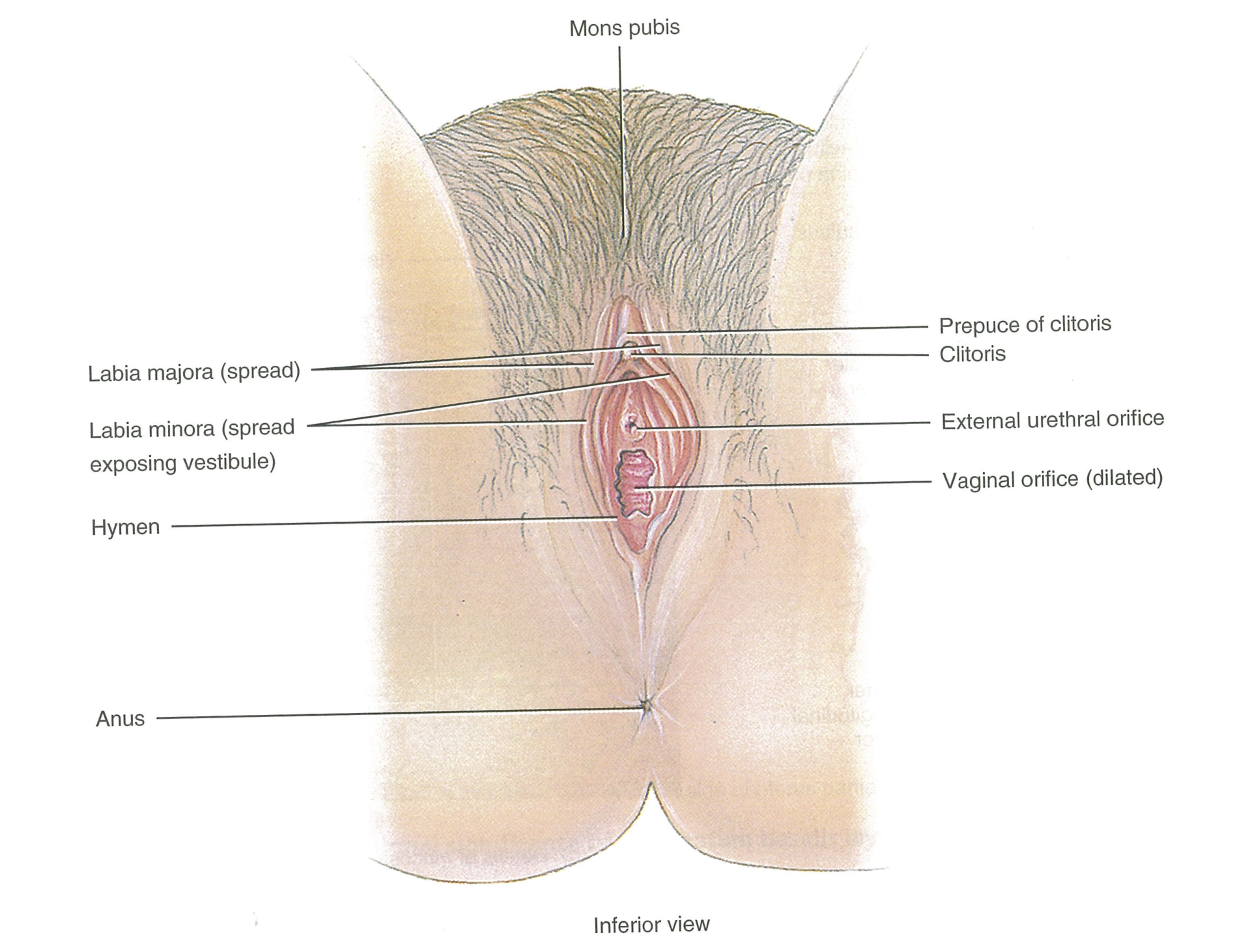 Anal Dilatation Porn Tube Free cant feel my clitoris . porn galleries.