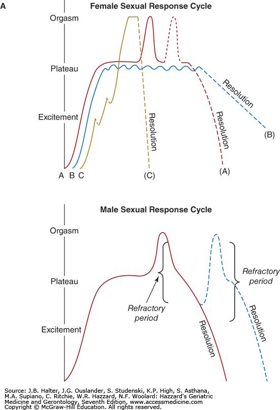 Female orgasm sexual cycle
