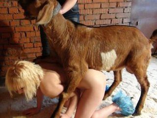 Goat fuck a hot girl Girl And The Goat Sex Pics Naked Photo Comments 1